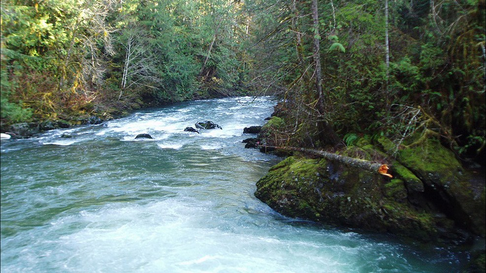 Swimmer disappears in cold, fast-running Olympic Peninsula