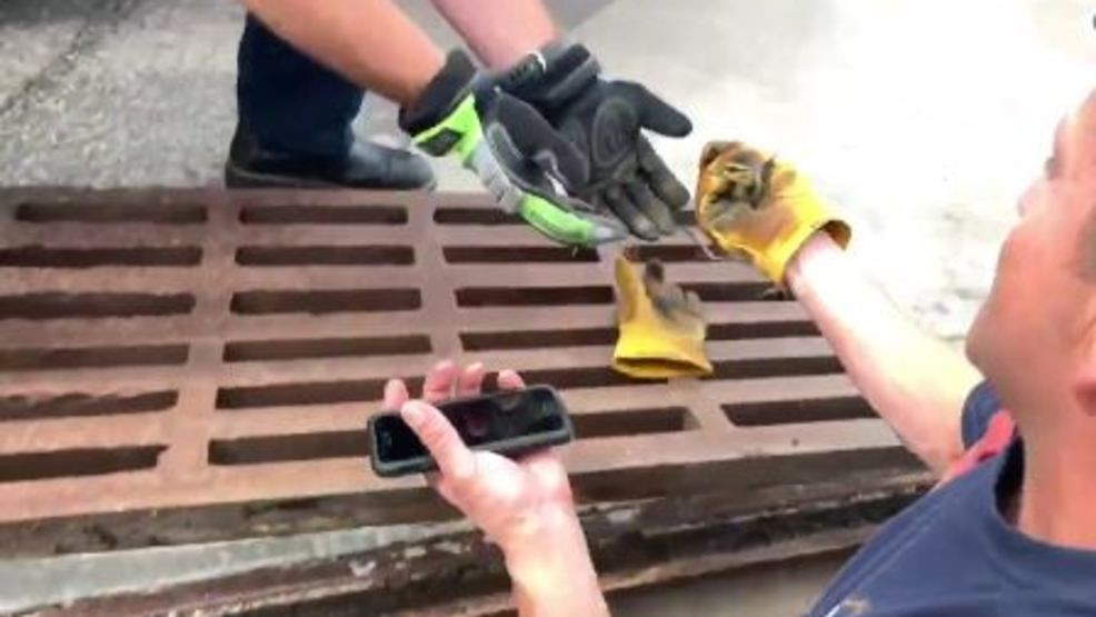 Firefighter uses YouTube duck calls to rescue ducklings   KOMO