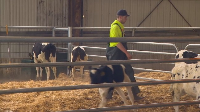 We are making electricity:' Dairy farmer making power from