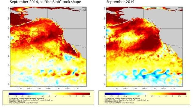 The Blob' is back in the Pacific Ocean, but what does it