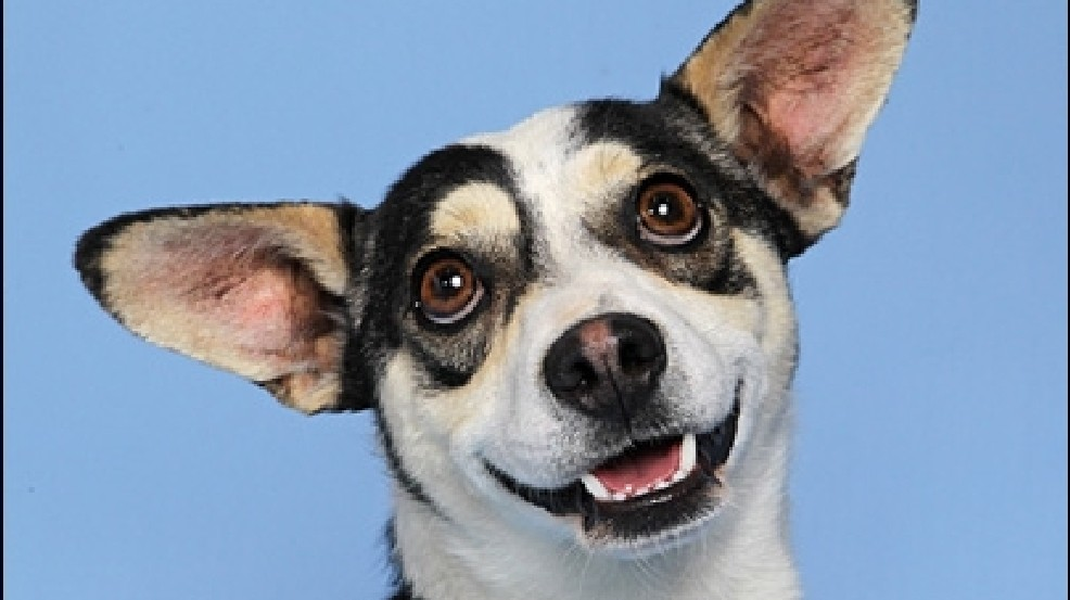 Questions to ask when adopting a pet | KOMO