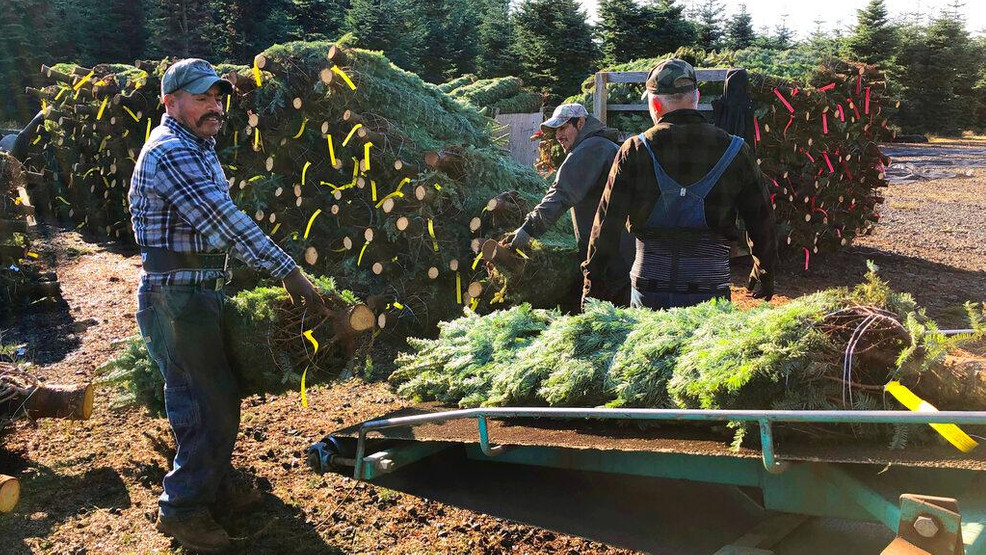 After tragedy, Oregon Christmas tree industry buoyed by bill | KOMO