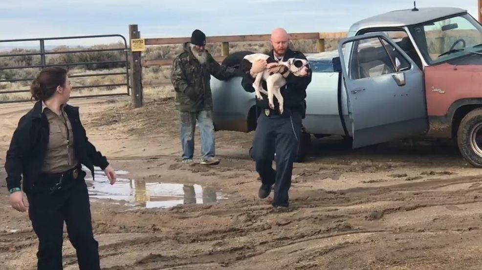 Dog survives 15 days in desert outside Boise after rollover